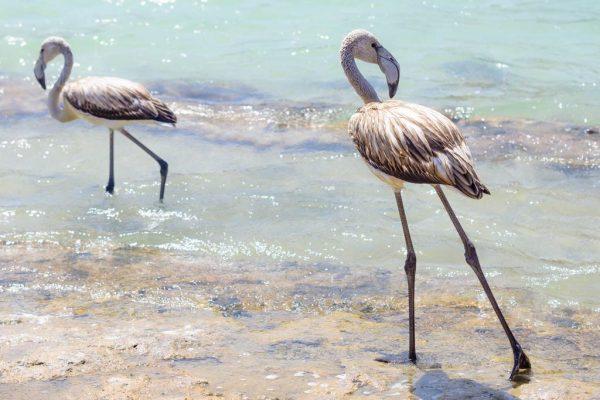 Pantelleria - Fenicotteri al Lago di Venere