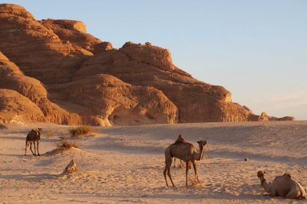 viaggio nel deserto
