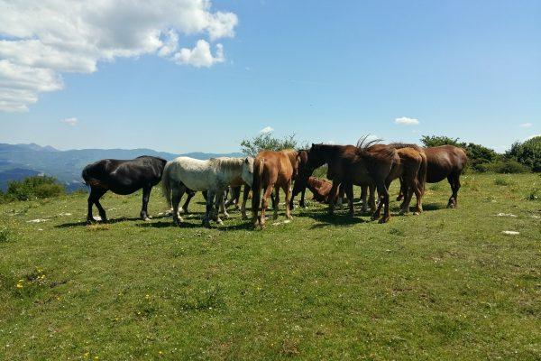 cavalli liberi lungo via della lana e della seta