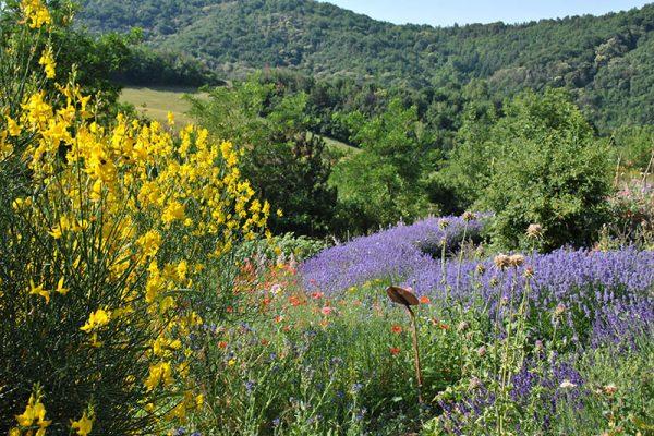 weekend di mindfulness nella natura