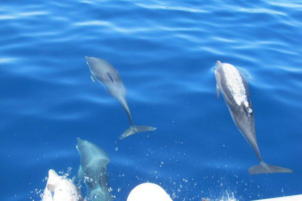 viaggio in barca a vela tra i delfini